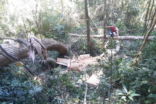 Rừng phòng hộ Đăk Đoa tiếp tục tan hoang vì lâm tặc