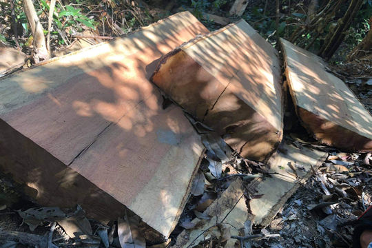 Khởi tố, bắt tạm giam Chủ tịch Hội đồng thành viên công ty phá 3 ha rừng