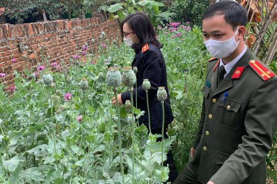 Người đàn ông trồng gần 3.000 cây anh túc và cần sa trong vườn