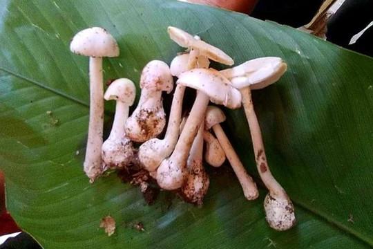 Cả 4 thành viên trong một gia đình cấp cứu vì ngộ độc nấm