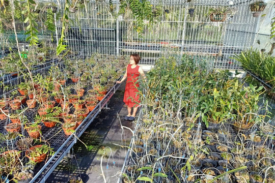 Bà chủ vườn lan Thu Thanh, người phụ nữ đặc biệt trong giới chơi lan