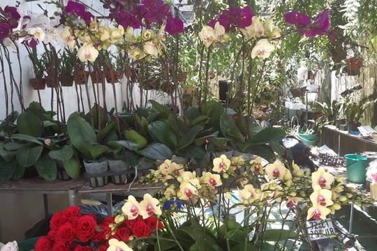 Bà chủ hoa lan Kim Thành: Từ bà nội trợ thành đại gia trồng lan đột biến