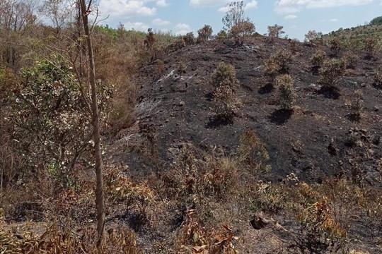 Hơn 2 hecta hồ tiêu và điều của người dân bị hỏa hoạn thiêu rụi