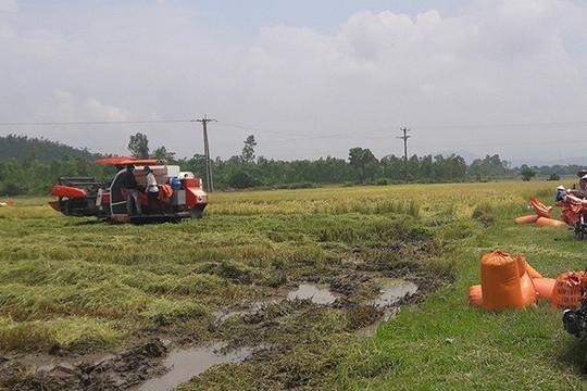 Mạnh tay xử lý nạn bảo kê máy gặt lúa