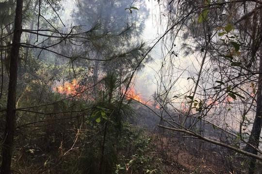 Xảy ra hai vụ cháy rừng lúc trời nắng nóng ở Nghệ An