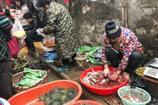 Tin vắn thế giới ngày 11/6: 47.000 động vật hoang dã được bán tại chợ Vũ Hán trước khi COVID-19 bùng phát