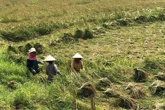 Trưởng bản người Mông giúp dân xóa đói, thắng giặc dốt
