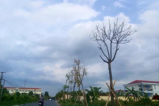 Nguyên nhân cây xanh chết bất thường tại TP Hải Dương