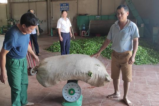Cựu chiến binh Đỗ Văn Đồng: Gương sáng phát triển kinh tế và hoạt động xã hội