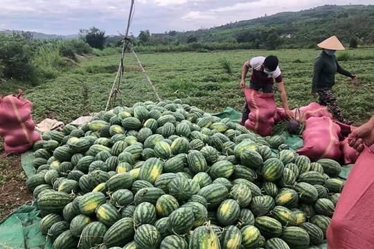 Phú Yên: Kết nối, hỗ trợ nông dân tiêu thụ nông sản vào vụ