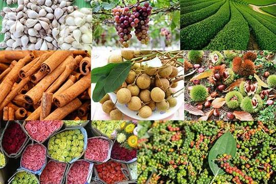 Cơ hội lớn để nông sản Việt vào thị trường Anh