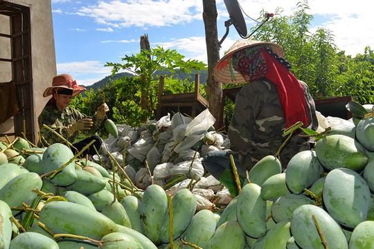 Mở cửa lớn cho xuất khẩu nông sản trong mùa dịch