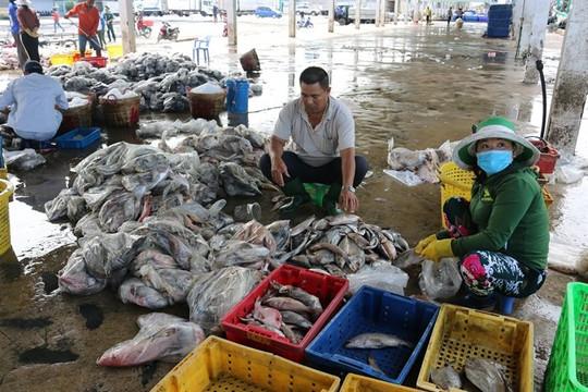 Kết nối doanh nghiệp tiêu thụ thủy sản cho các tỉnh đồng bằng sông Cửu Long