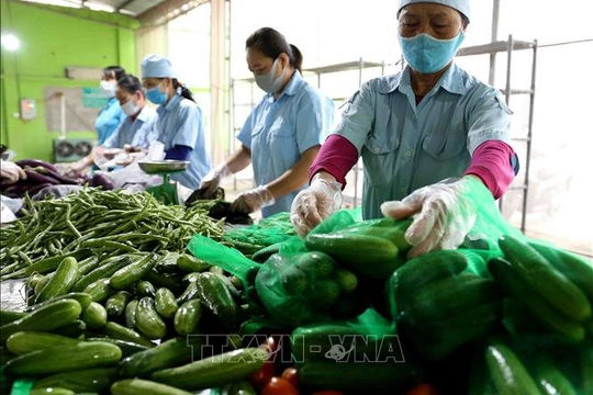 """Nông sản Việt mạnh mẽ vươn xa, vượt qua """"bão Covid"""""""