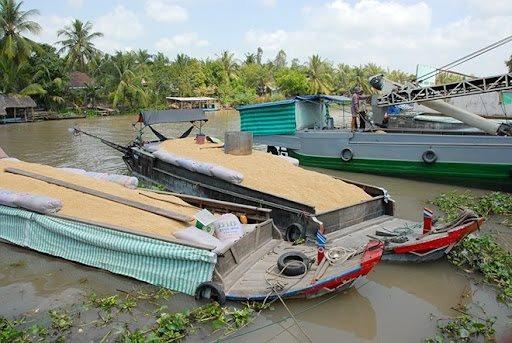 Luồng xanh đường thủy nội địa khơi thông vận chuyển lúa, gạo