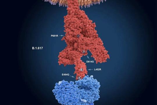Tin vắn thế giới ngày 20/8: Israel phát hiện chuỗi lây lan nguy hiểm của chủng đột biến mới của biến thể Delta