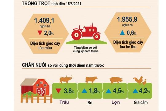 Infographic: Tình hình sản xuất nông nghiệp tính đến 15/8