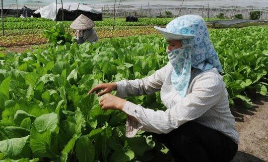 Doanh nghiệp ngành nông nghiệp và sự chuyển mình trong đại dịch, sẵn sàng tăng trưởng hậu Covid