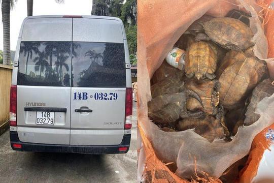 Bắt giữ xe khách vận chuyển 34 cá thể rùa quý trong sách đỏ thế giới