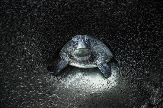 Chùm ảnh: Vẻ đẹp đại dương qua góc máy của các nhiếp ảnh gia đại dương năm 2021