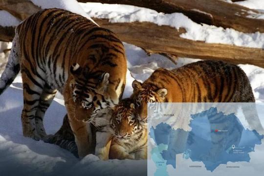 Tổng thống Putin thông báo thời gian tổ chức Diễn đàn Bảo tồn Hổ lần thứ hai